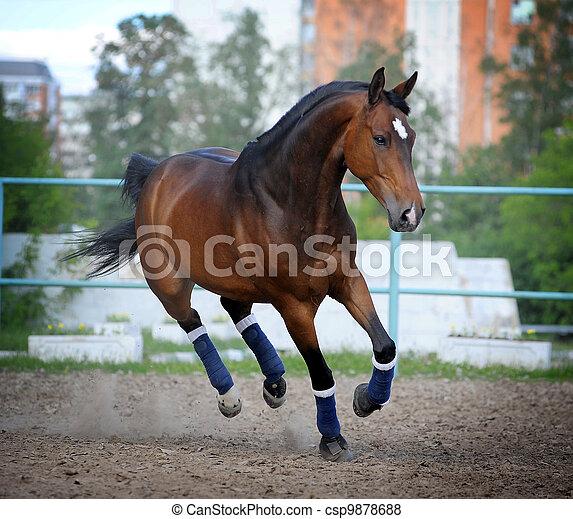 paddock, Häst - csp9878688