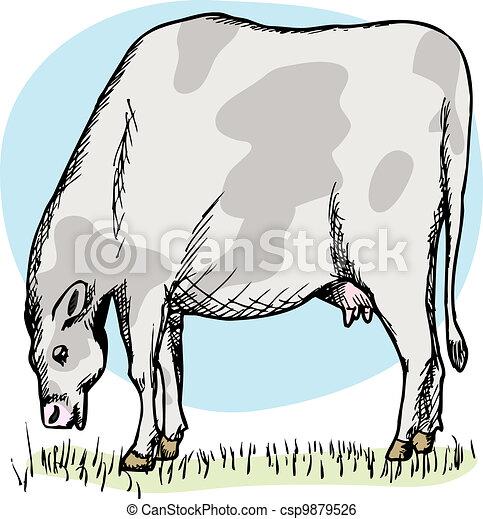 Fat Cow Grazing - csp9879526