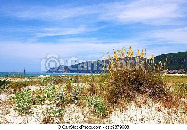 Beach Vegetation - csp9879608