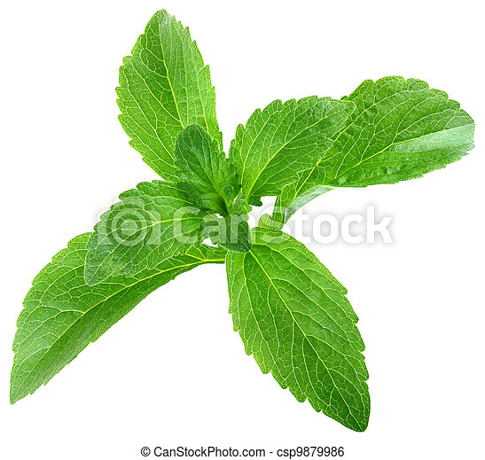 Stevia Rebaudiana Leafs Cut Out - csp9879986