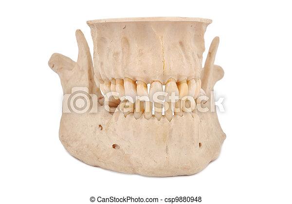human jaw - csp9880948