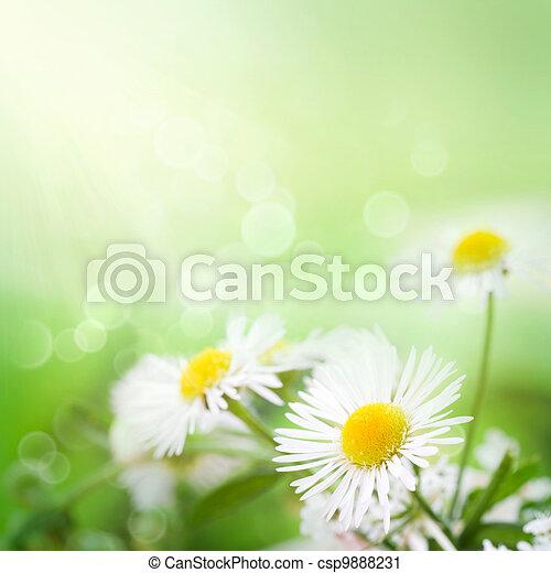 Wild daisies - csp9888231