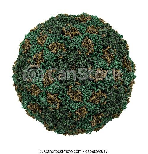 foot-and-mouth disease virus (FMDV) - csp9892617