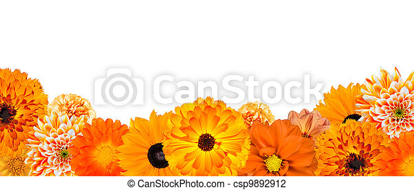 Selection of Various Orange Flowers at Bottom Row Isolated  - csp9892912