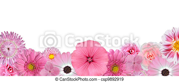 Selection of Various Pink White Flowers at Bottom Row Isolated - csp9892919