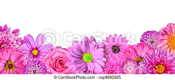 Selection of Various Pink White Flowers at Bottom Row Isolated - csp9892925