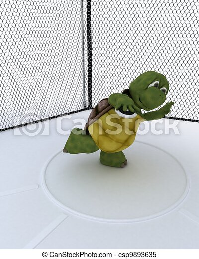 tortoise competing in discus - csp9893635