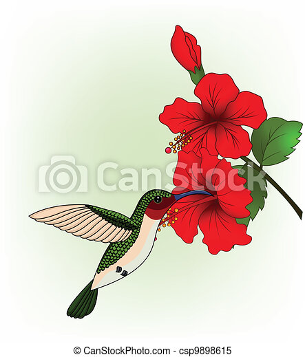 Hummingbird with red flower - csp9898615