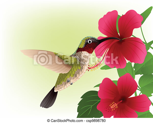 Hummingbird with red flower - csp9898780