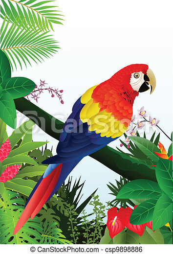 Macaw bird in the tropical forest  - csp9898886