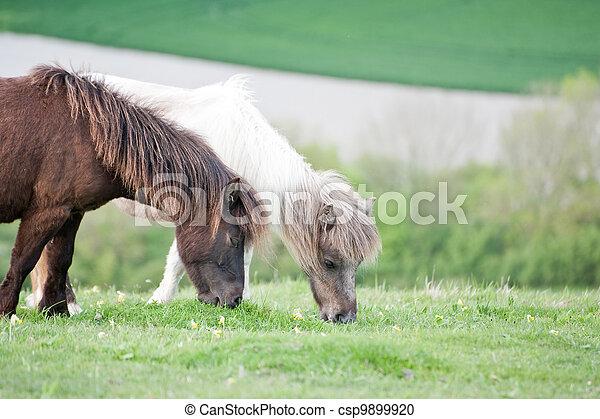 Portrait of farm horse animal in rural farming landscape - csp9899920