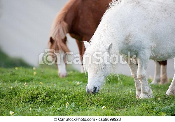 Portrait of farm horse animal in rural farming landscape - csp9899923