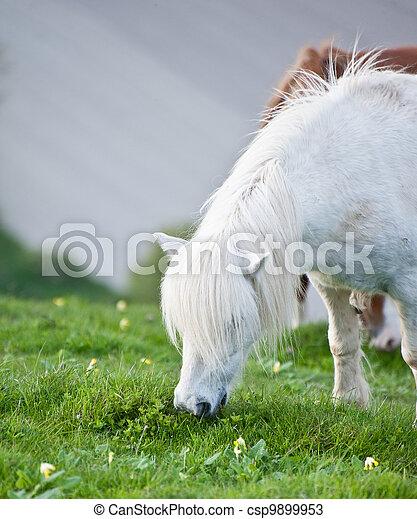 Portrait of farm horse animal in rural farming landscape - csp9899953