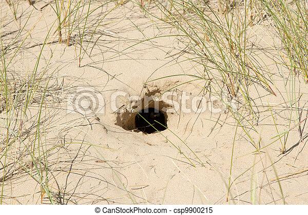 Sand burrow.