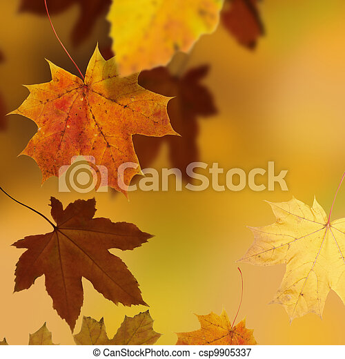 otoño - csp9905337