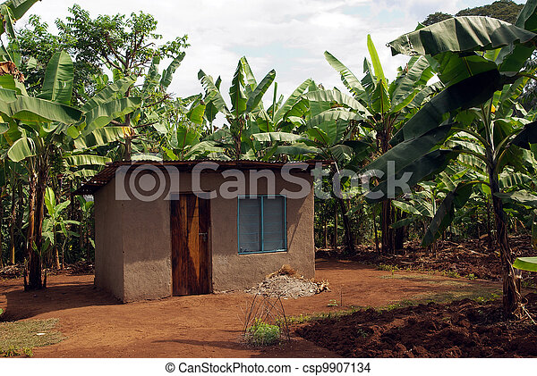Shack in banana plantations - csp9907134