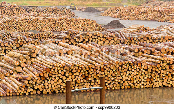 Stockpiled timber ready to be milled to lumber - csp9908203