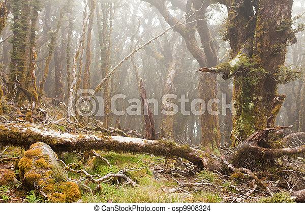Virgin mountain rainforest of Marlborough, NZ - csp9908324