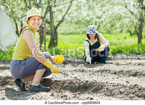 women works at vegetables garden - csp9909604