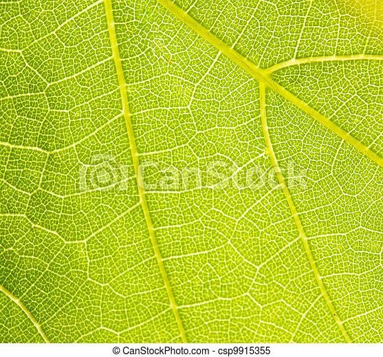 grapevine leaf macro as background  - csp9915355