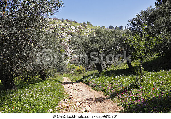 Footpath among the spring nature. - csp9915701