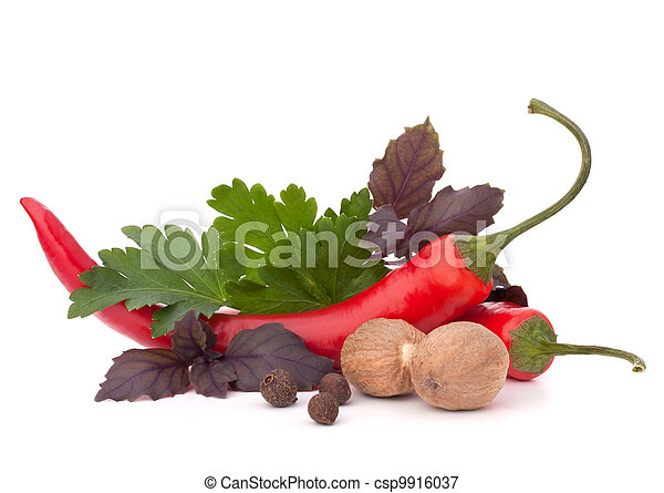 Hot red chili or chilli pepper and aromatic herbs leaves still life isolated on white background cutout - csp9916037