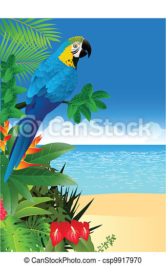 Macaw bird with tropical beach back - csp9917970