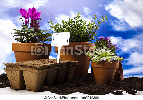 Gardening equipment with plants - csp9919380