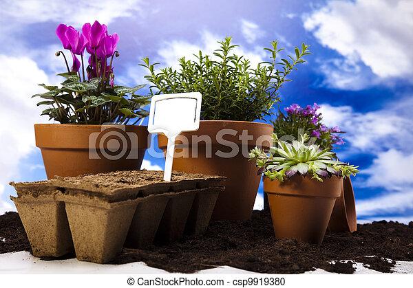 Gardening equipment with plants  - csp9919380