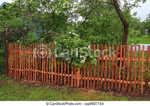 flowering viburnum near wood fence - csp9927154
