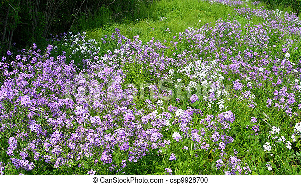 Meadow with wildflowers - csp9928700