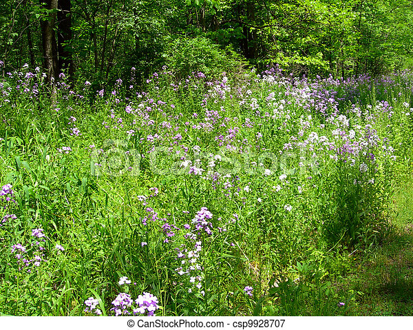 Meadow with wildflowers           - csp9928707