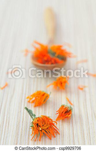 marigold herbal tea  - csp9929706