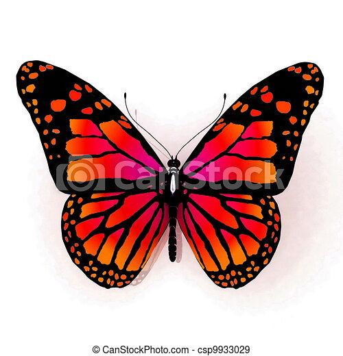 Illustration de couleur papillon orange isolated - Papillon dessin couleur ...