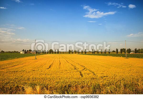 Rural landscape - csp9936382
