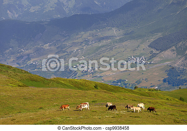 Grazing cow on green meadow in Caucasus Mountains - csp9938458