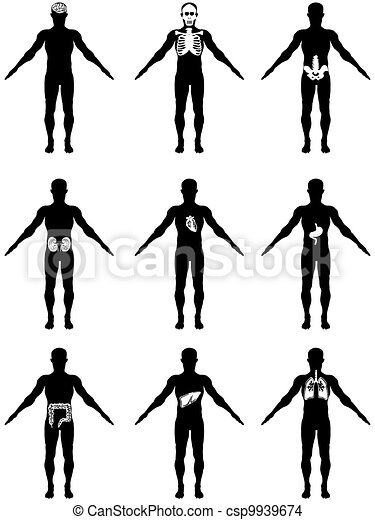 human organs in body icons - csp9939674