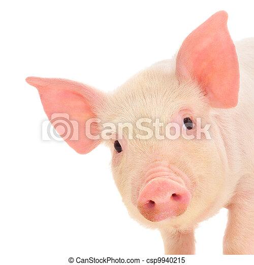 Pig on white - csp9940215