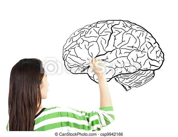 woman drawing human brain diagram - csp9942166