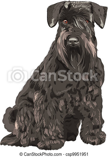 vector black Miniature Schnauzer dog sitting - csp9951951