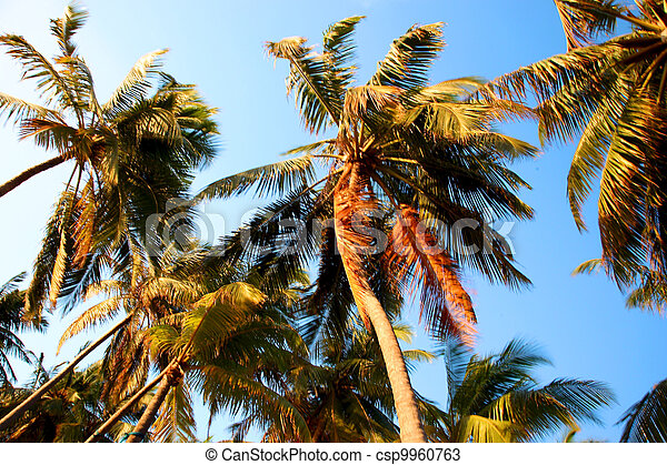 Coconut tree and sunset in the Maldives - csp9960763