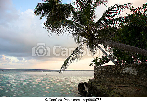 Coconut tree and sunset in the Maldives - csp9960785