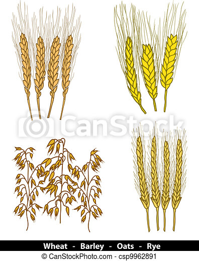 Cereals illustration - csp9962891