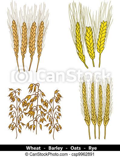 Cereals illustration - csp9962891