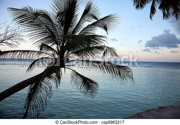 Coconut tree and sunset in the Maldives - csp9963217