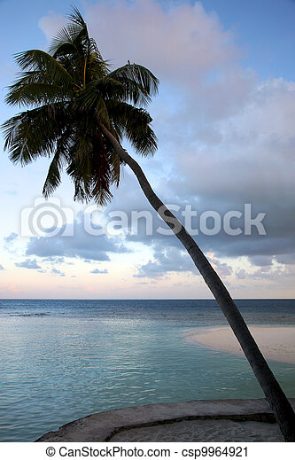 Coconut tree and sunset in the Maldives - csp9964921