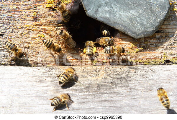 Entrance to the old hive - csp9965390