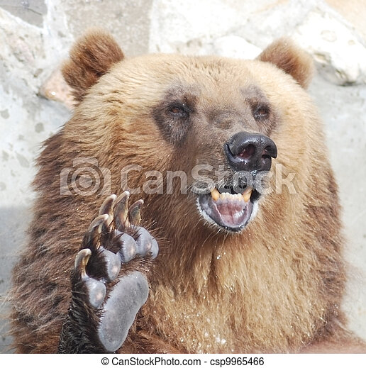 The brown bear welcomes with a paw - csp9965466
