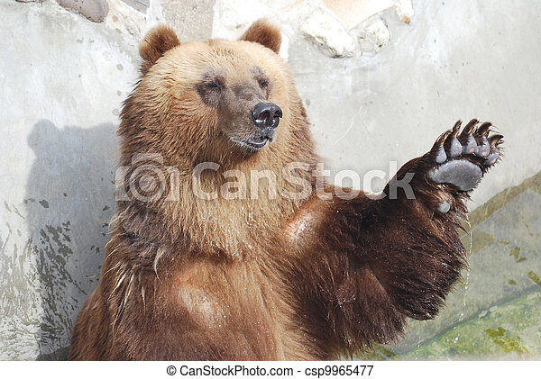 The brown bear welcomes with a paw - csp9965477