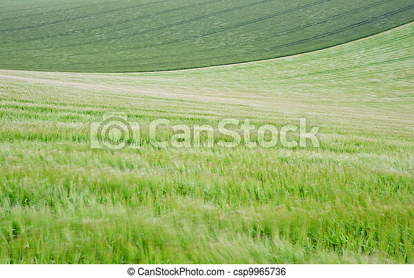 Landscape across agricultural fields on windy Summer day - csp9965736